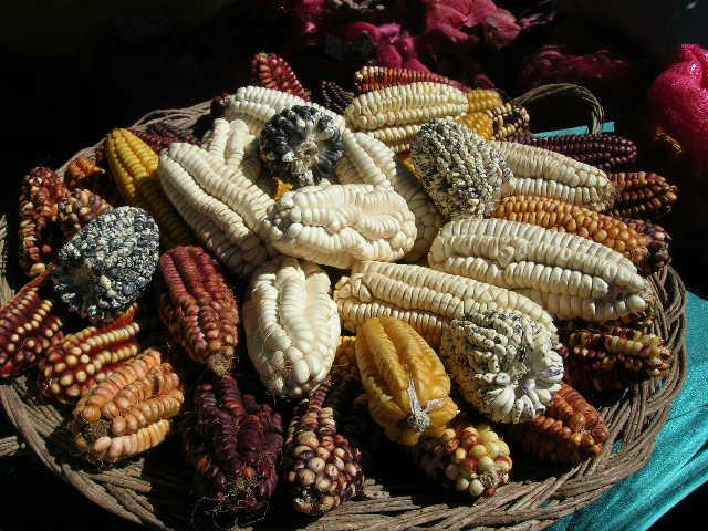 """native corn"""