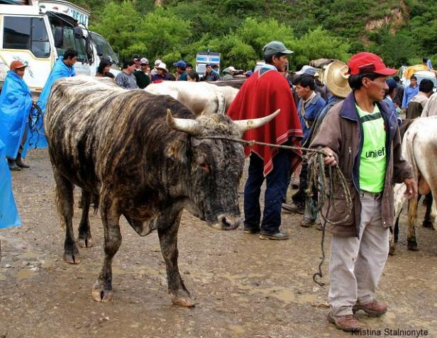 this market is held once a week. chachapoyas