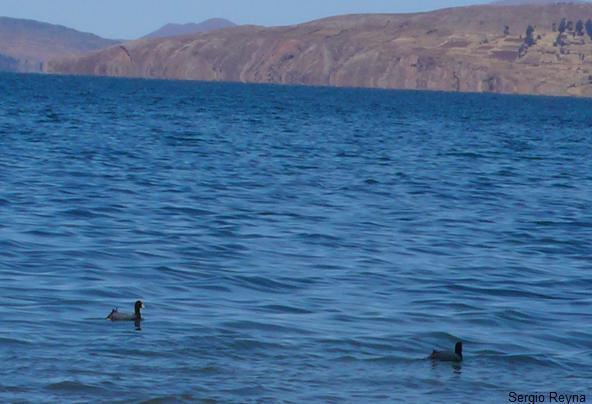 fauna of the lake